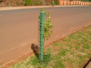 Plantio de mudas