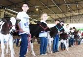 Alunos das escolas do campo de Beltrão exibiram seus animais no julgamento do Clube da Bezerra, nesta sexta na Expobel